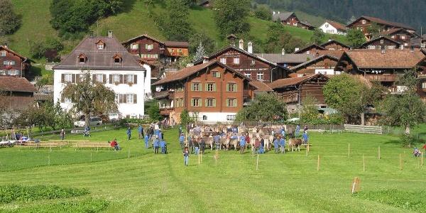 Viehmarkt in Jenaz