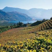 Südtirol als Weinanbauregion