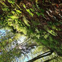 Blick im Wald