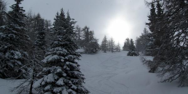 Traumafte Abfahrt nach Neuschnee in den Waldschneisen