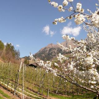 Bergwandern im Vinschgau