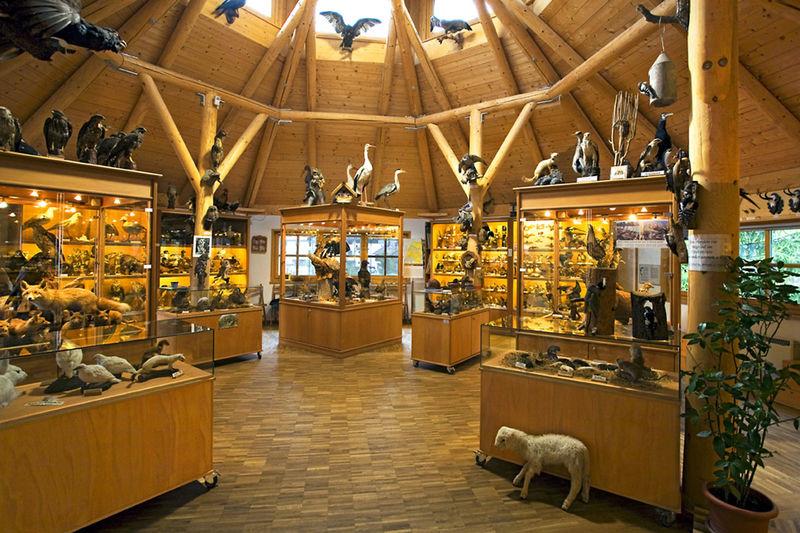 Ausstellungsraum im Tierkundemuseum Brückmühl.