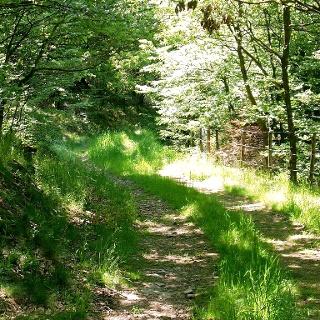 Durch Wald und Flur