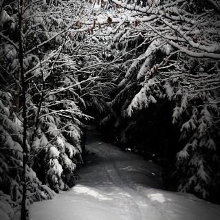 Winterlicher Trail