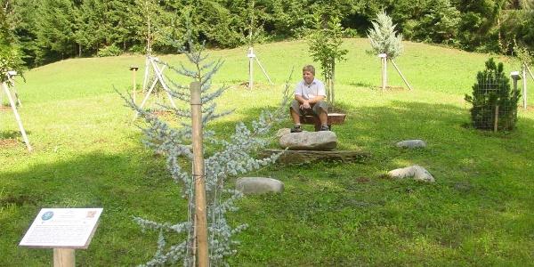 Zachgraben - Keltischer Baumkreis