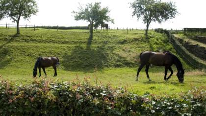 Pferdeglück in Orsbach