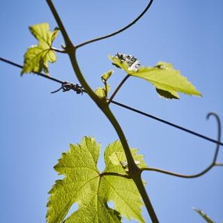 Weingut Reinhold Bernardy