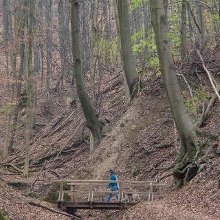 Baumriesen und schmale Stege: Das Tretschbachtal.