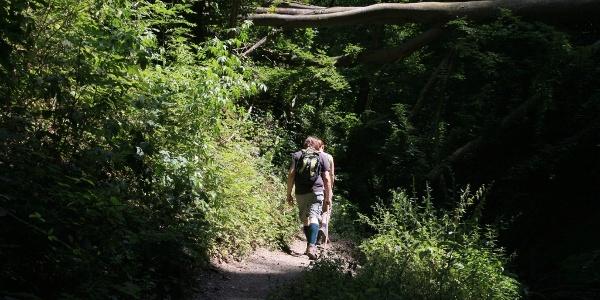 Wanderer auf einem Wanderpfad in der Ehrbachklamm