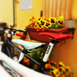 Mountainbike bei Rimini - Monte Leone