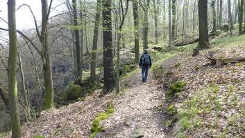 Foto Weg zur Königsnase