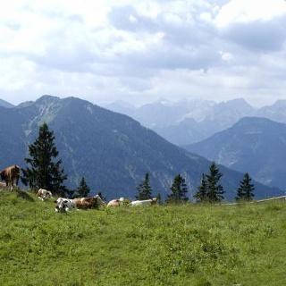 Die kleine Staffelhütte (Staffelalm-Hochleger) vor dem Karwendelgebirge