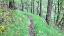 Wolfstein - Königsbach-Weg