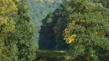 Premiumweg P7 Söder Wald