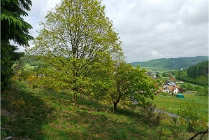 (Foto: Carola Heimann, Quelle: Naturpark Lahn-Dill-Bergland)