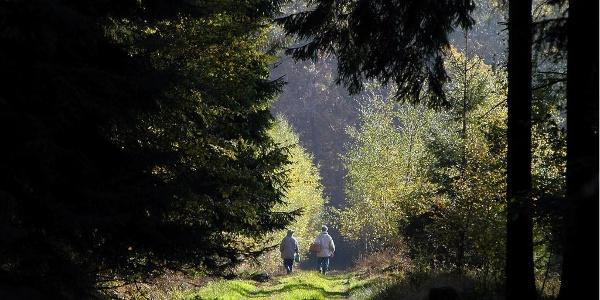 Wanderer im Hunsrück-Wald