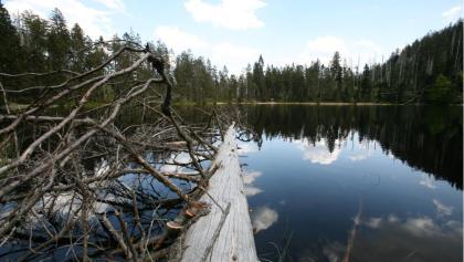 Wildsee