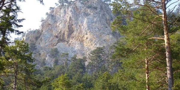 Der Weningerturm