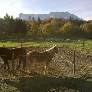 Pferde beim Wiesenhof
