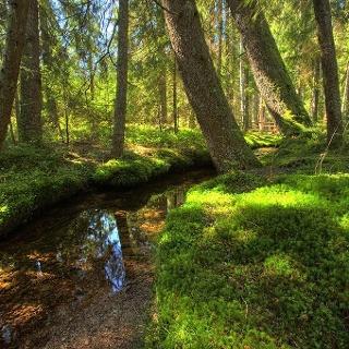 Bernau im Schwarzwald: Auf dem Zauberwald-Pfad im Taubenmoos, ein wunderschönes Hochmoor im Bernauer Hochtal