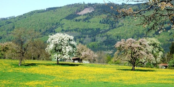 Dinkelberg