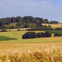"""Blick auf den Rabensberg im FFH-Gebiet """"Kalkmagerrasen bei Ossendorf"""""""