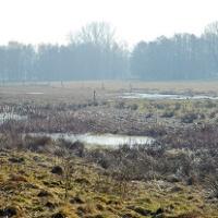 Als Weide genutztes Feuchtgrünland