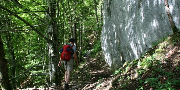 Der Steig führt in angenehmer Steilheit durch den Fichten-/Buchenwald zum Sattel des Kofels.