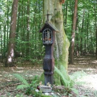 Bildbaum im Forst
