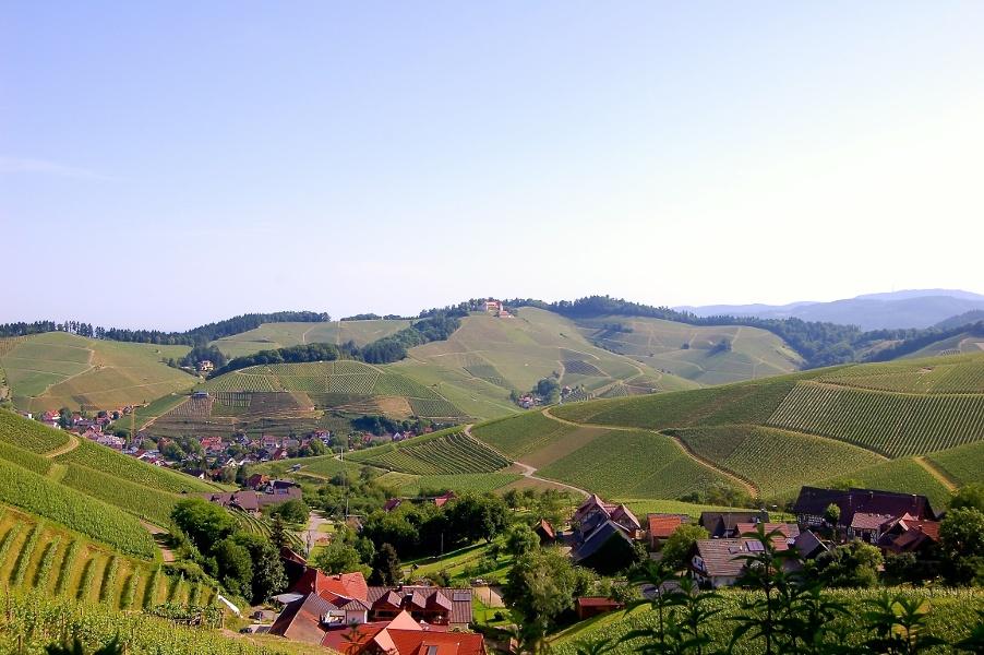 Durbach - Von Weinkeller zu Weinkeller