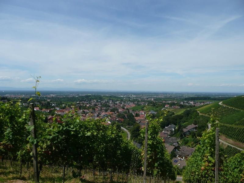 Oppenau - Durch die Weinberge nach Baden-Baden