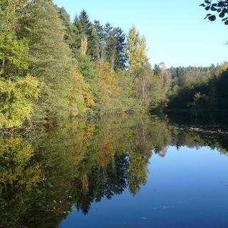 Nach wenigen Metern erreicht man den idyllischen Georgsteich mit seinen Wasservögeln.