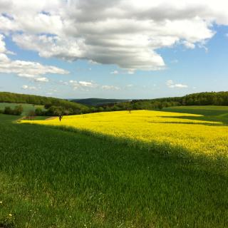 Natur pur bei Hergenfeld