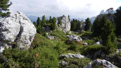 """In der """"Steinernen Stadt"""" am Sellajoch."""