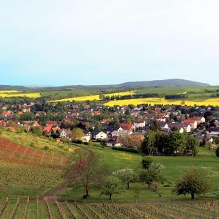 Blick auf Weinsheim