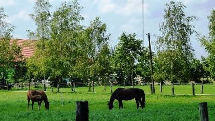 Pferde im Moos