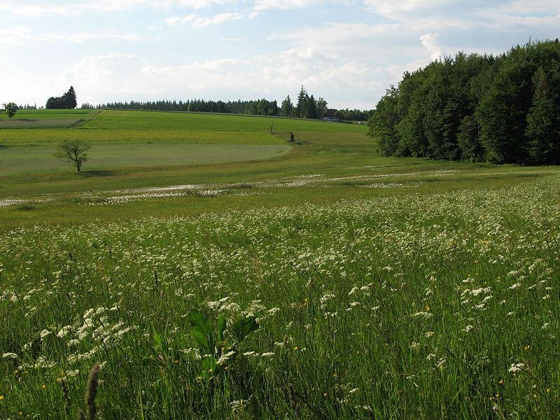 Durch das Naturschutzgebiet Kreuzmoos