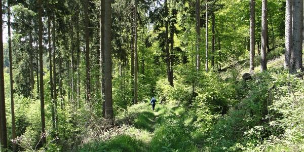 Weg hinunter zum Rinkenbach