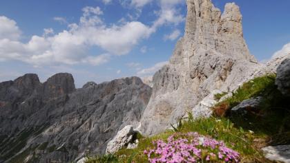Klettersteig Rosengarten : Die schönsten klettersteige in der rosengarten gruppe