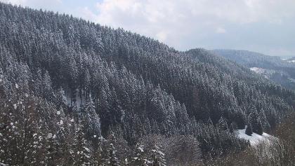 Typischer Fichtenwald im Schwarzwald