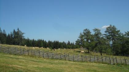 Almlandschaft rund um die Unterauerlingerhütte
