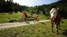 Mountain bike tour – Pürschling