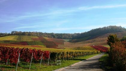 Natur- und Weinlehrpfad im Zweifelberg
