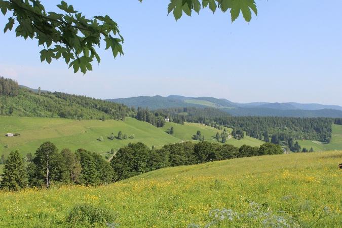 Vom idyllischen Schwarzwalddörfchen Todtnauberg hinunter nach Todtnau