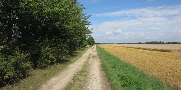 Weg nahe Zöschen (Aug. 2013)