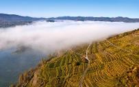 Die Weinlage Pfaffenberg © Donau Niederösterreich/Markus Haslinger