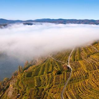 Die Weinlage Pfaffenberg