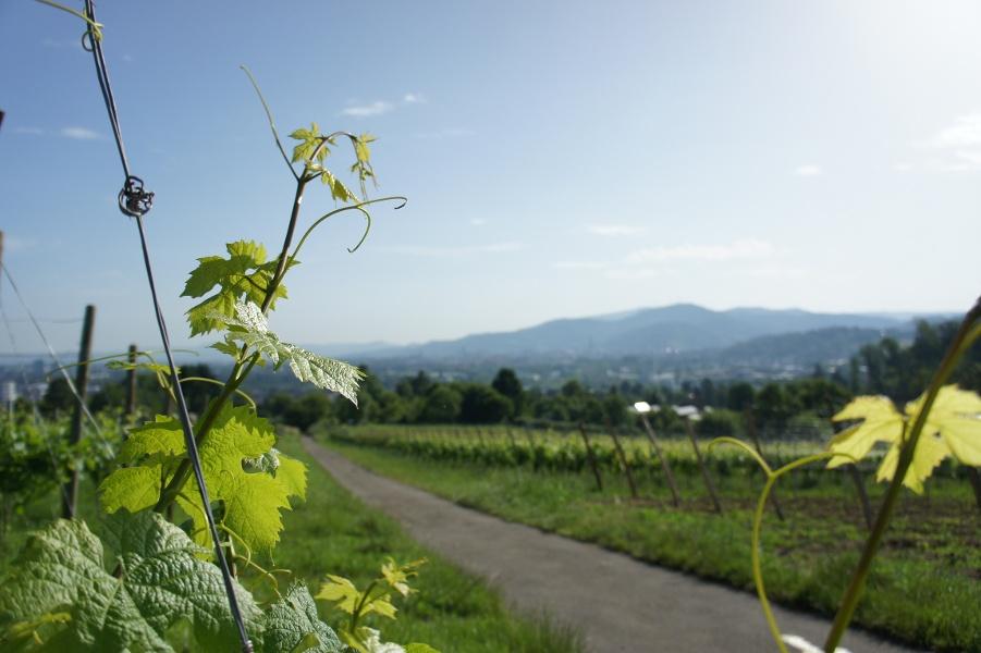Bad Krozingen - Wandern von Bad zu Bad