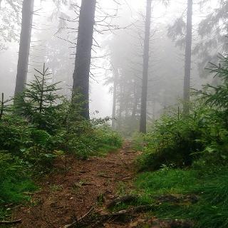 Trailrunning Hoherodskopf