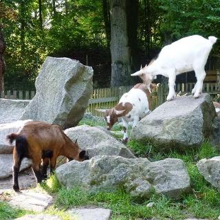 Streichelzoo im Stadtpark